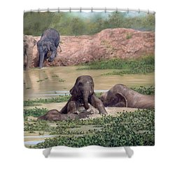 Asian Elephants - In Support Of Boon Lott's Elephant Sanctuary Shower Curtain