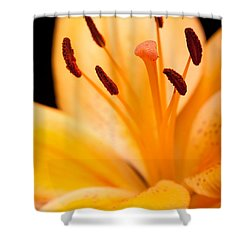 Asian Lily Shower Curtain by Sebastian Musial