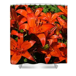 Shower Curtain featuring the photograph Asiatic Lily by Sue Smith