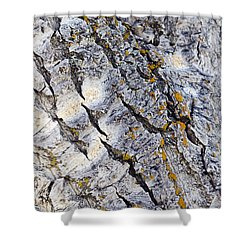 Aspen Bark Shower Curtain by Dee Cresswell