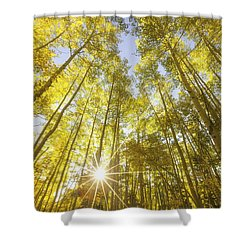Aspen Day Dreams Shower Curtain by Darren  White