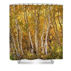 Aspen Glow Shower Curtain