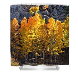 Shower Curtain featuring the photograph Aspen Gold by Lynn Bauer