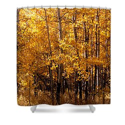 Aspen Grove Tahoe City Shower Curtain by William Havle