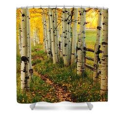 Aspen Path Shower Curtain by Ronda Kimbrow