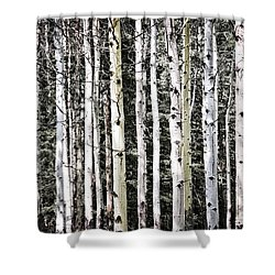 Aspen Tree Trunks Shower Curtain by Elena Elisseeva