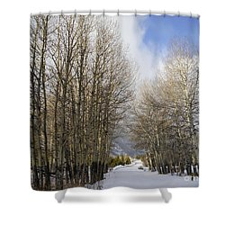 Aspen Trees Along Snowy Colorado Path Shower Curtain