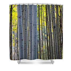 Aspen Trunks Shower Curtain by Inge Johnsson