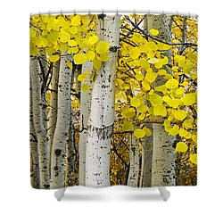Aspens At Autumn Shower Curtain by Andrew Soundarajan