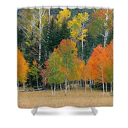 Aspens And Meadow-pan Shower Curtain