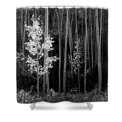 Aspens Northern New Mexico Shower Curtain by Ansel Adams