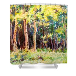 Aspens On The North Rim Shower Curtain by Katrina West