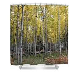 Shower Curtain featuring the photograph Aspen's Yellow Glow by Ruth Jolly