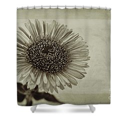 Aster With Textures Shower Curtain by John Edwards
