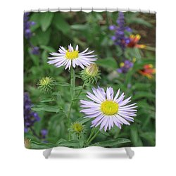 Asters In Close-up Shower Curtain
