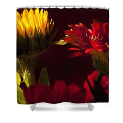 Asters In The Light Shower Curtain