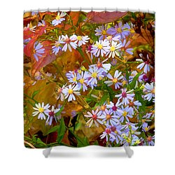 Asters Shower Curtain by Ron Jones