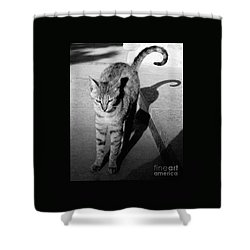 Shower Curtain featuring the photograph Aswan Cat by PJ Boylan