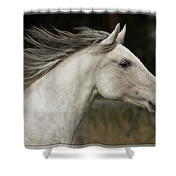 At A Full Gallop Shower Curtain by Wes and Dotty Weber