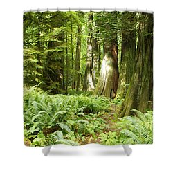 At Cathedral Grove Shower Curtain
