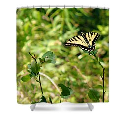 Shower Curtain featuring the photograph At Rest by Meghan at FireBonnet Art