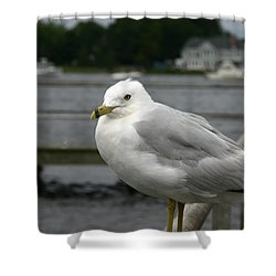 Shower Curtain featuring the photograph At The Boat Landing by Denyse Duhaime