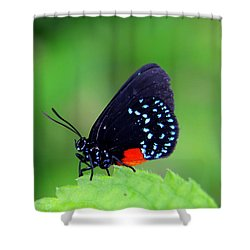 Atala Butterfly Shower Curtain by Sean Allen