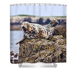 Atlantic Grey Seal Halichoerus Grypus Shower Curtain by Liz Leyden