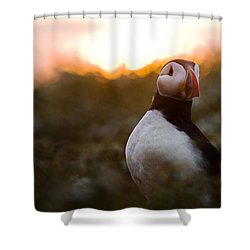 Atlantic Puffin At Sunrise Skomer Shower Curtain by Sebastian Kennerknecht