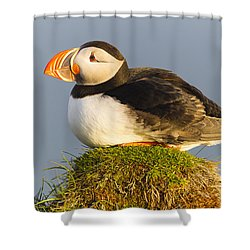 Shower Curtain featuring the photograph Atlantic Puffin Iceland by Peer von Wahl