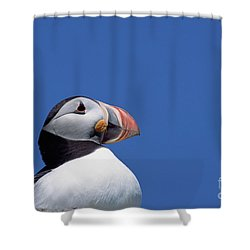 Atlantic Puffin In Breeding Colors Shower Curtain by Yva Momatiuk and John Eastcott