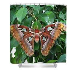 Shower Curtain featuring the photograph Atlas Moth #2 by Judy Whitton