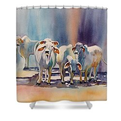 Attention All Ears.  Brahman Bulls Shower Curtain by Roxanne Tobaison