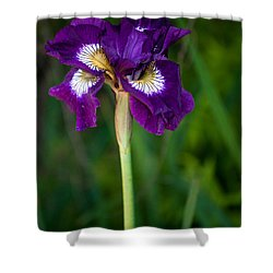 Attention Shower Curtain by Penny Lisowski