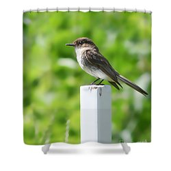 Shower Curtain featuring the photograph Attentive Phoebe by Anita Oakley