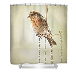 Atticus Shower Curtain