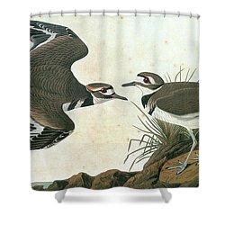 Audubon Killdeer Shower Curtain