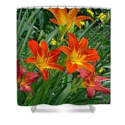 Lilies Galore Shower Curtain