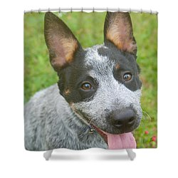 Australian Cattle Dog Shower Curtain