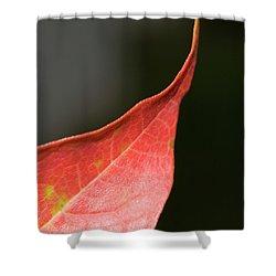 Shower Curtain featuring the photograph Autumn 2 by Tara Lynn