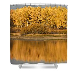 Autumn Aspens Reflected In Snake River Shower Curtain by David Ponton