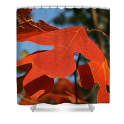 Shower Curtain featuring the photograph Autumn Attention by Neal Eslinger