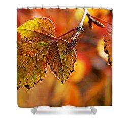 #autumn Shower Curtain