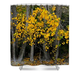 Autumn Breakout Shower Curtain