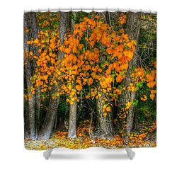 Autumn Breakout No.2 Shower Curtain