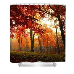 Autumn Canopy Shower Curtain by Terri Gostola