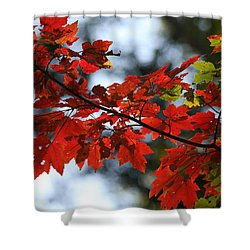 Shower Curtain featuring the photograph Autumn Contrasts by Vadim Levin