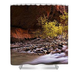 Shower Curtain featuring the photograph Autumn Cottonwood In The Narrows by Andrew Soundarajan