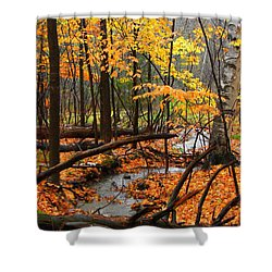 Shower Curtain featuring the photograph Autumn Creek In The Rain by Rodney Lee Williams