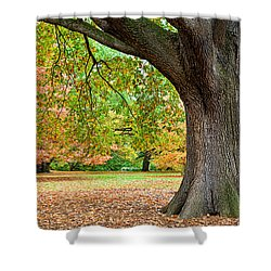 Autumn Shower Curtain by Dave Bowman